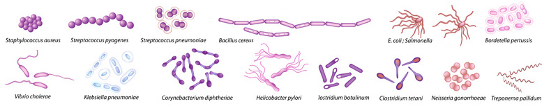 Bacteria have all different kinds of shapes
