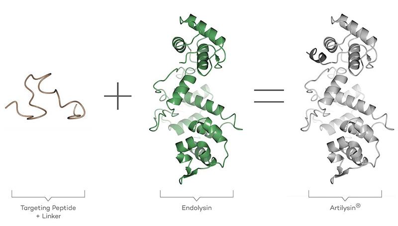新規エンドリシン®-合成抗菌タンパク質