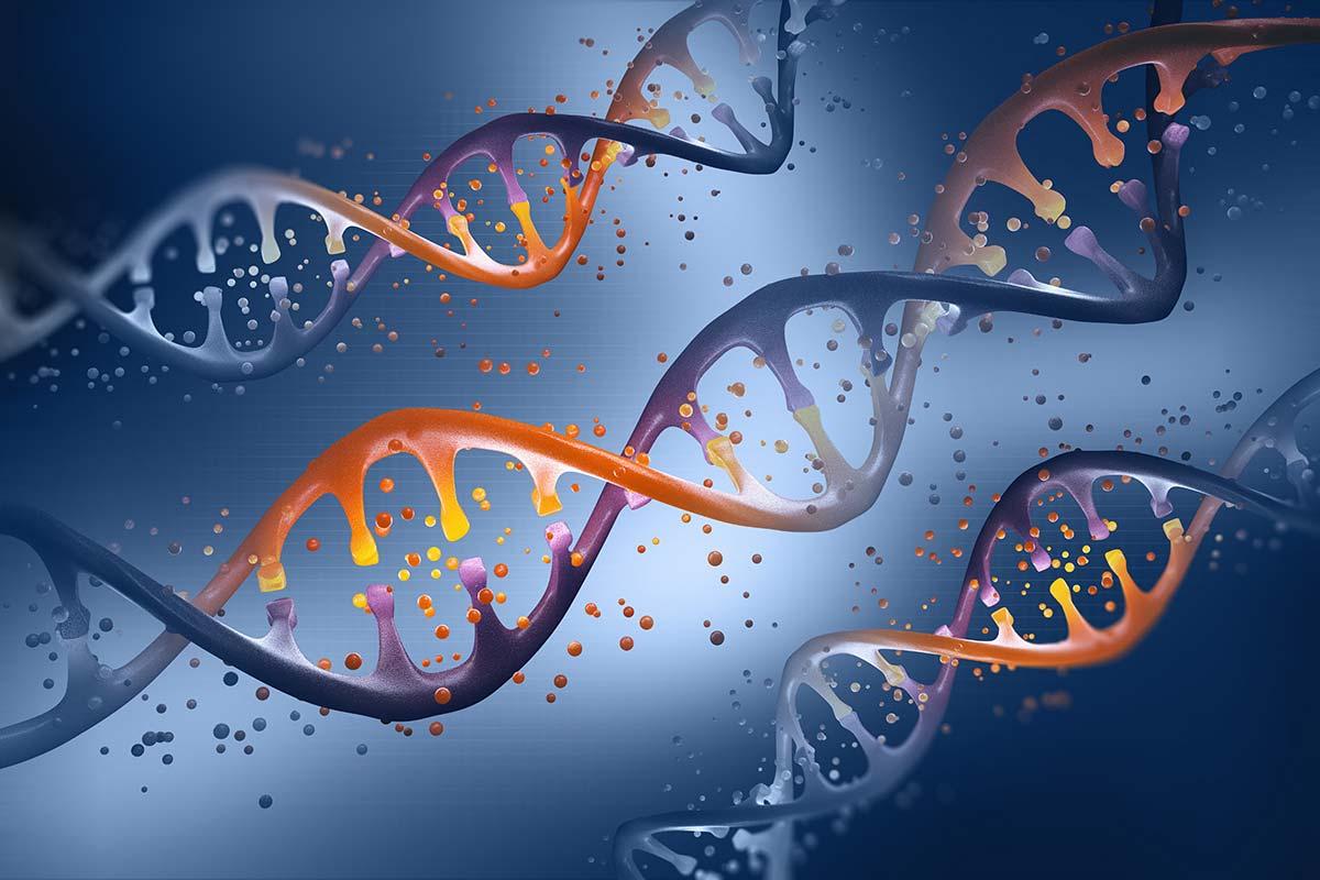 遺伝的傾向はマイクロバイオームの細菌構成に大きな影響を及ぼします。